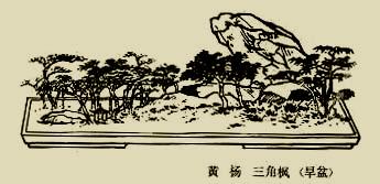 bz_0021.jpg