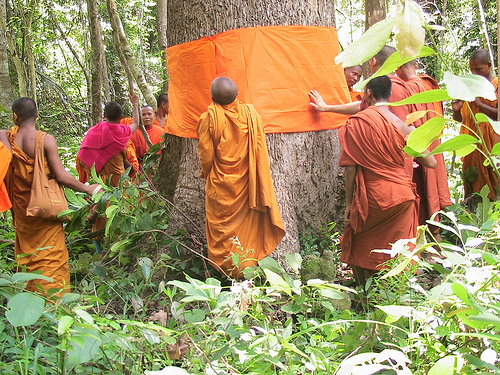cambodian-monks-and-trees.jpg